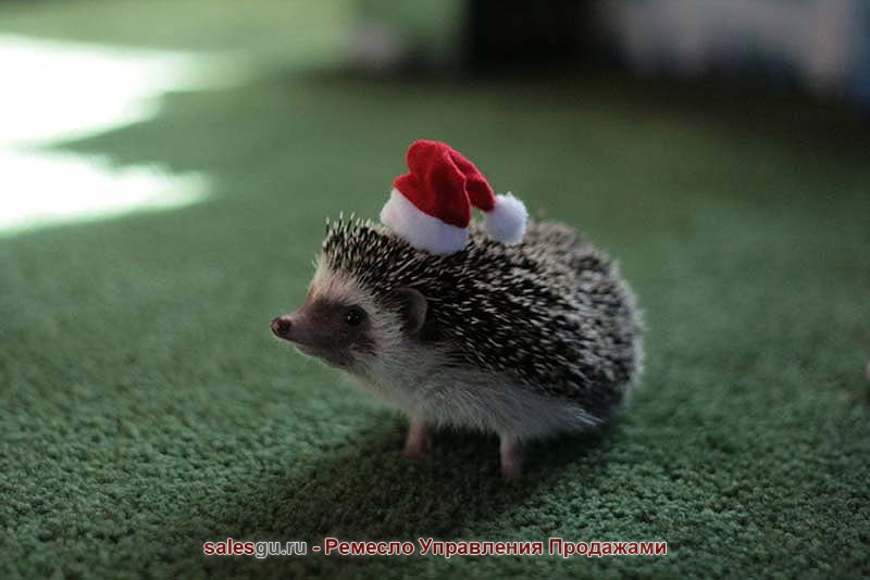 Hedgehog-For-Christmas-and-New-Year