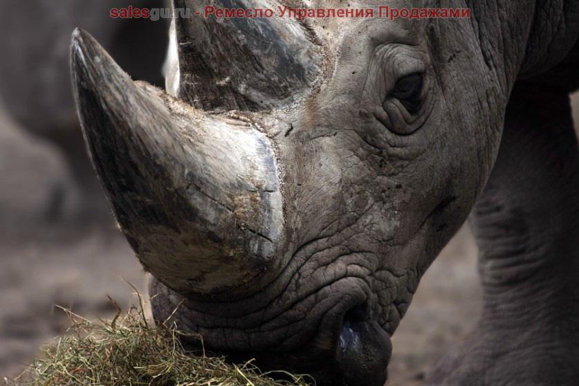 Рог носорога. Автор фото: Андре Вильнев (Andre Villeneuve)