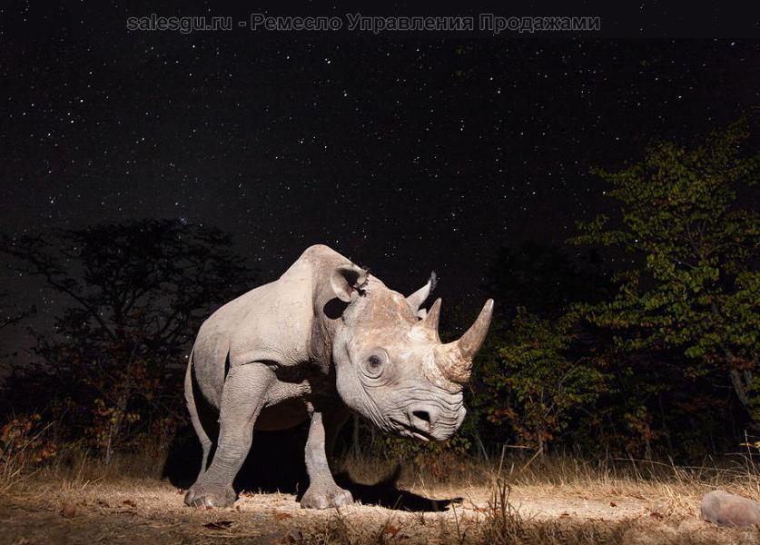 Носорог под звёздами. Автор фото: Уилл Беррард-Лукас (Will Burrard-Lucas)