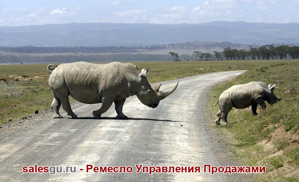 Белые носороги. Найроби (Кения). Автор фото: Thomas Mukoya