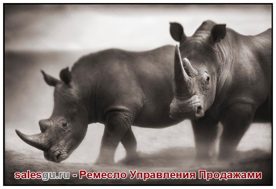 Два носорога. Автор фото: Nick Brandt