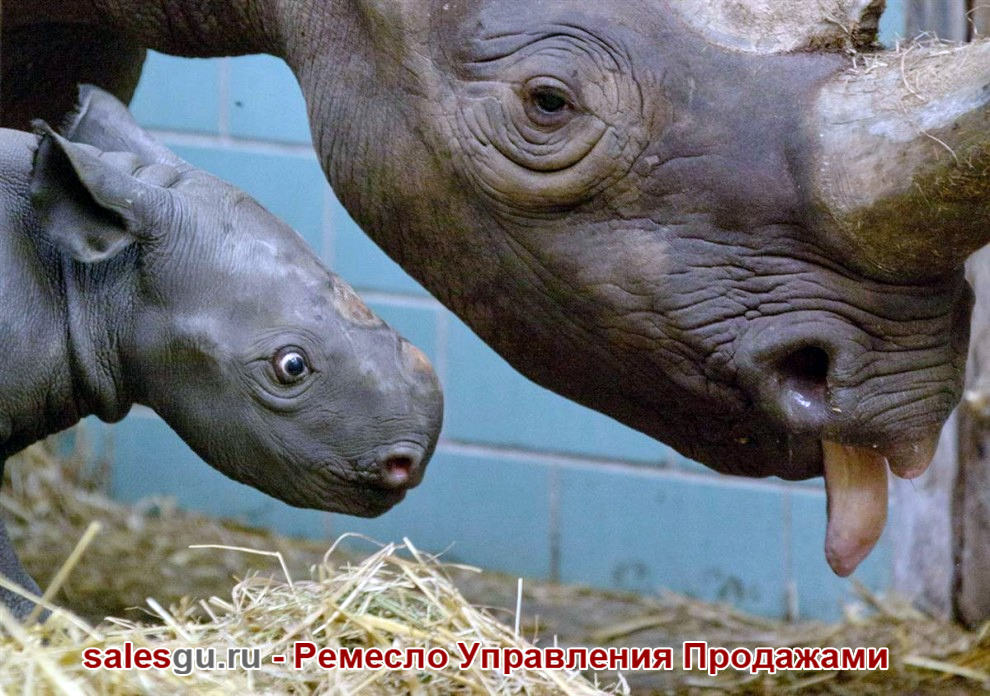 Детёныш черного носорога. Зоопарк Берлина. Автор фото: Gero Breloer