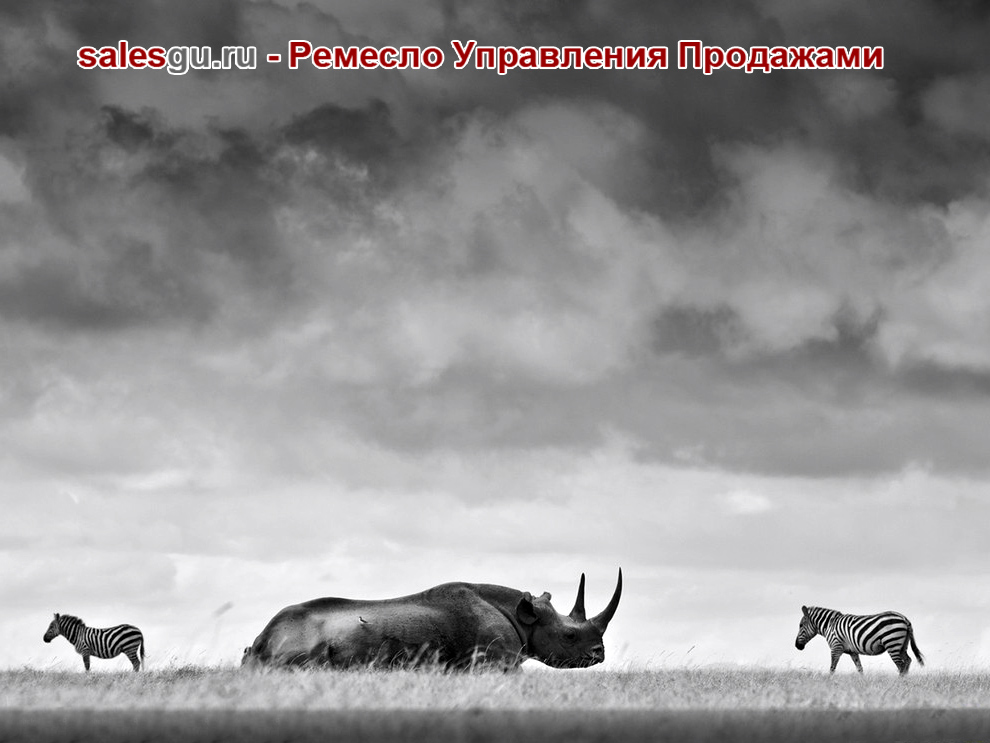 Носорог под грозными тучами. Автор фото: Robin Moore